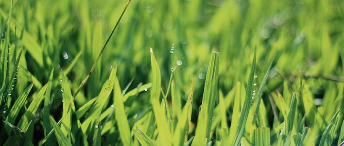 TruGeen customizes lawn care for your specific needs, to bring out the best from your yard.