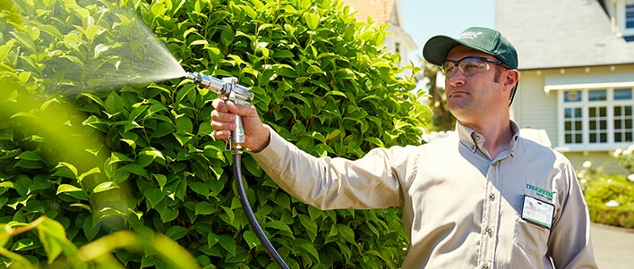 TruGreen experts will assess the health of you shrubs and customize treatment.