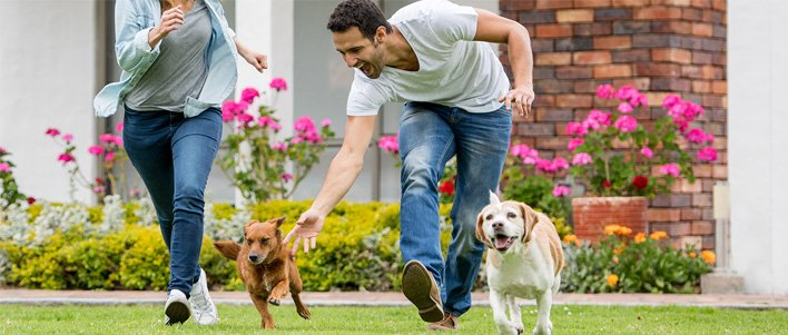 TruGreen customers playing with their dogs on their maintained front yard.