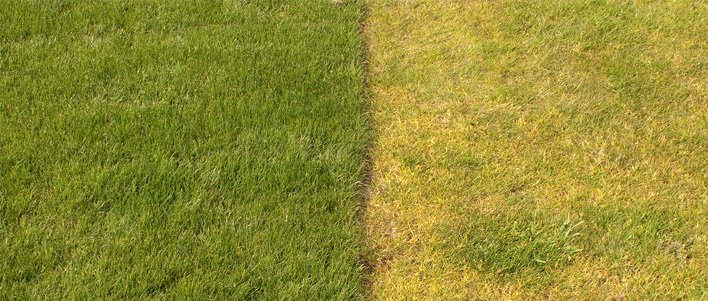 TruGreen Treated lawn vs. untreated lawn comparison.