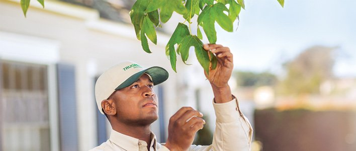Let TruGreen specialists maintain your tree and shrub health.