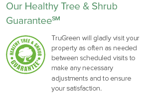 Our Healthy Tree Guarantee